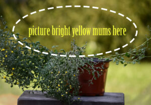 picture-mums-here
