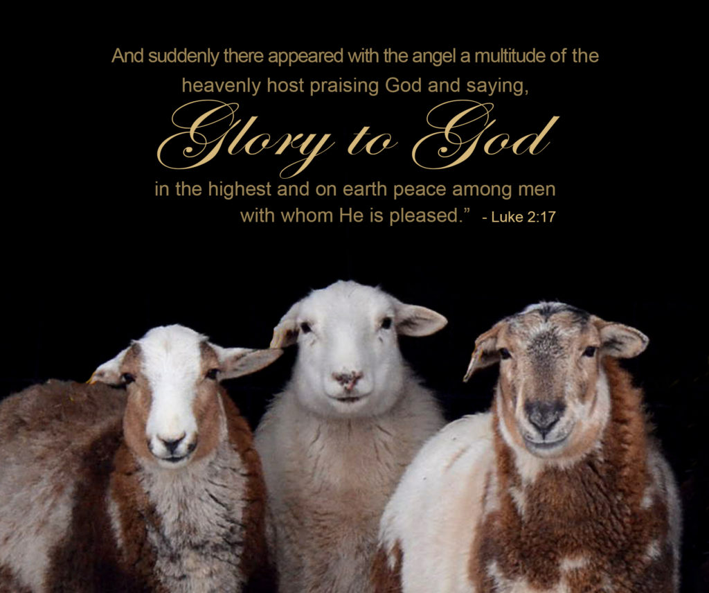 three-sheep-with-text
